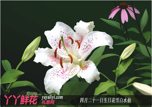 四月二十一日生日花雪白水仙花语