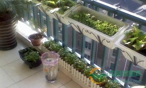 核心提示:阳台种菜,已经越来越多的人喜欢上在自家的阳台种植点蔬菜瓜果。不仅种植的蔬菜瓜果安全健康,而且在种植的过程中也能够陶冶性情,很适合养生人士。但是在种植的过程中,需