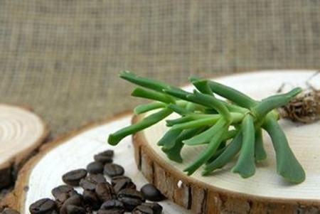 快刀乱麻烂根的两种可能性:新栽种的缓根新栽种的快刀乱麻,会有一些时间的缓根。检查发现底下茎秆没什么问题的话就是在消耗老叶缓根,等待根系慢慢长出就行了。不必担心!快刀乱麻