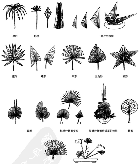 艺术插花中叶材的处理与造型方法