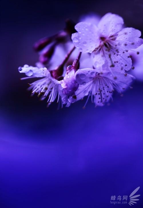 常见花卉的拍摄技巧