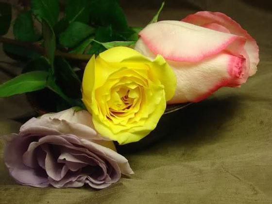 喜欢玫瑰干花,喜欢那种沧桑之中透着美丽的独特韵味和那似有若无的幽香。虽然她散发不出鲜花的清香,也展现不了鲜花的娇艳和妩媚,但她那种怀旧的典雅忧郁的美却是永恒的。