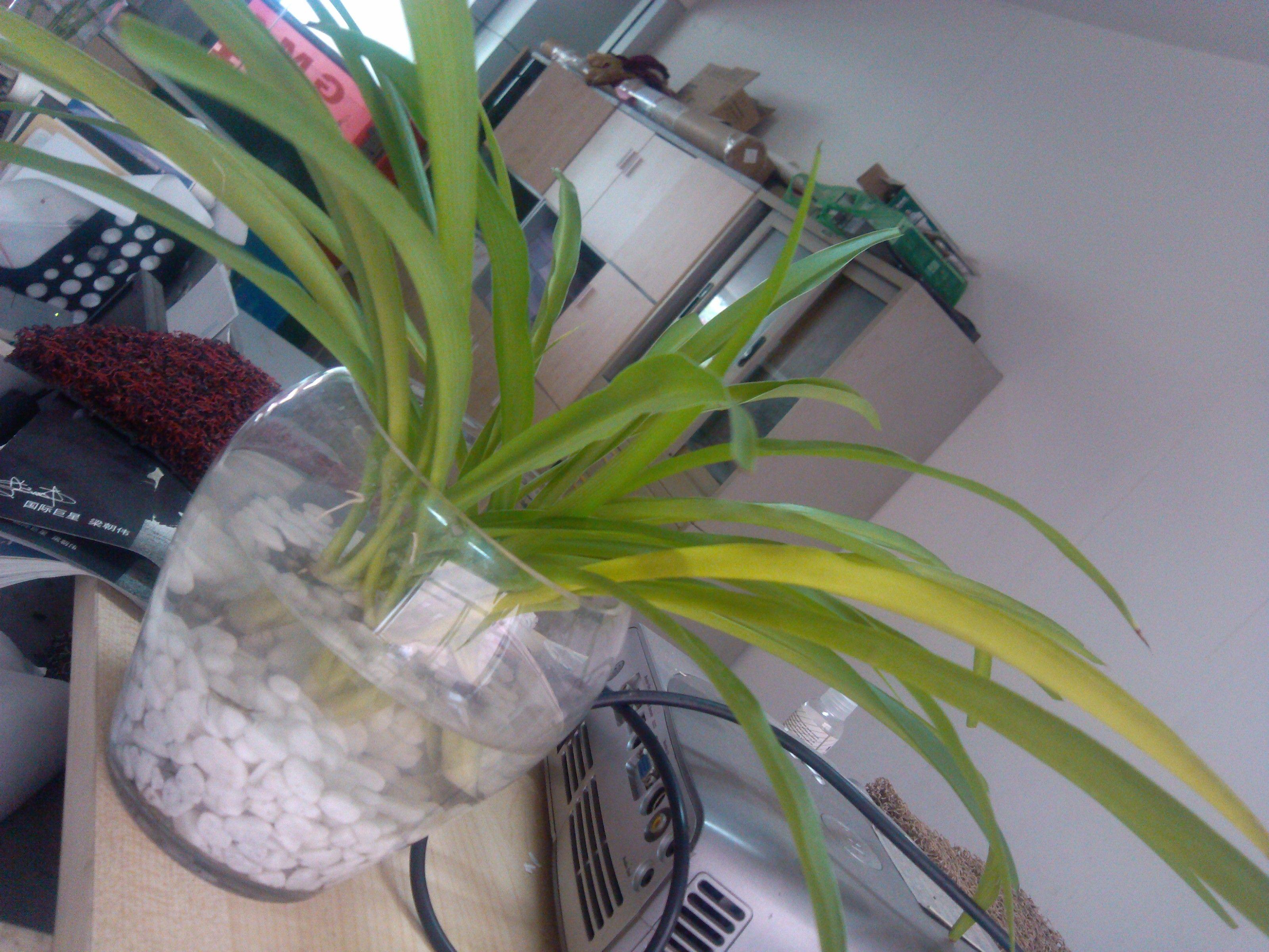 如何识别花木烂根看盆土在夏秋季节,生长正常的花木,在晴好天气每天浇1次透水,到了第二天同一时间检查盆土,盆土发干显露微白则根系正常;若不见其盆土收干发白,仍然呈潮湿状态,则说