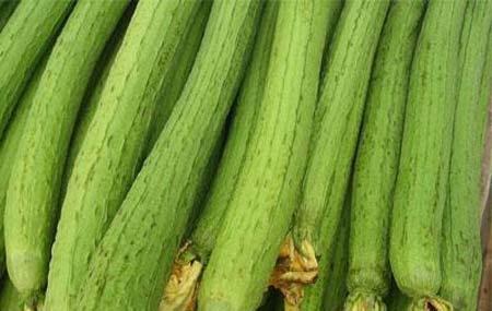 夏季吃丝瓜好吗? 有什么好处丝瓜又名天丝瓜,丝瓜翠绿鲜嫩,清香脆甜,不仅营养丰富,而且有一定的药用价值,浑身都是宝。它含有大量的矿物质、植物粘液、木糖胶等物质,能刺激人体产生