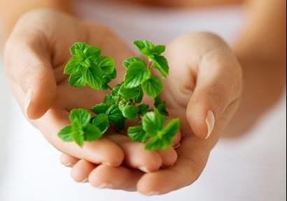 使用薄荷油的注意事项薄荷油是由薄荷植物花朵蒸馏萃取而得,通常是淡黄色或黄绿色精油液体,其主要功效有退烧,缓解恶心和呕吐,改善消化能力,以及减轻呼吸系统疼痛等。薄荷油的芳香
