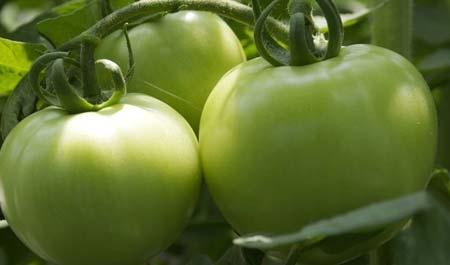 常见的这些食物比砒霜还毒  赶快扔掉今天小编就为大家介绍下,饮食中哪些食物的毒性堪比砒霜!所以说为了家人的饮食健康考虑,速来了解下吧!一、这种食物竟比砒霜还毒1、青西红柿